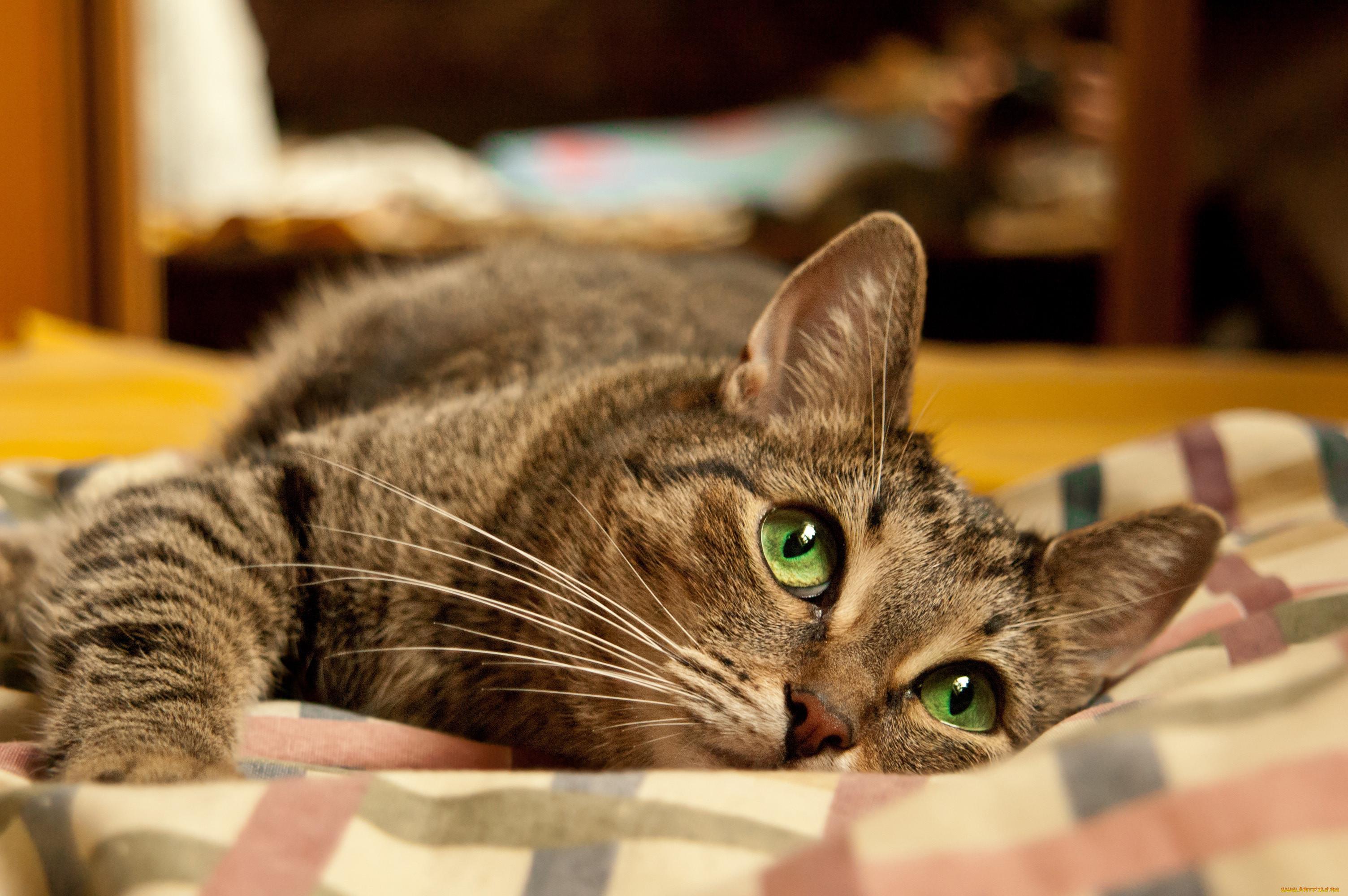 началова чуть можно картинки котов бюджетно
